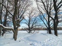 轻拍蓝天和光秃的树在积雪的领域边缘 免版税图库摄影