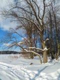 轻拍蓝天和和金黄阳光在光秃的树在积雪的领域边缘 库存照片