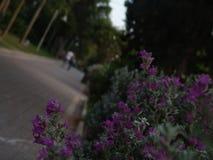 轻易地胜过在绿色公园被铺的胡同的年轻成人青少年的夫妇照相机在与树排队的和紫色花灌木的日落 图库摄影