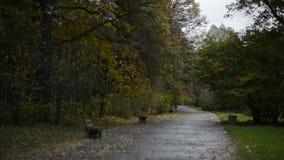 轻易获胜伞的人在秋天公园 影视素材