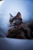 轻松的黑小猫 库存图片