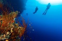 轻潜水员剪影在深墙壁上的有鞭子珊瑚的 免版税库存照片