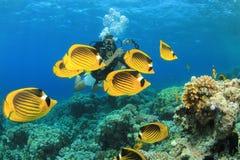 轻潜水员和鱼 库存照片