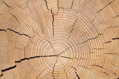 轻的木结构 库存照片