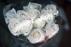 轻的玫瑰花束在黑暗的背景的在早晨阳光下 免版税库存照片