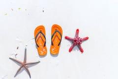轻碰在白色沙滩的flopsand海星 图库摄影