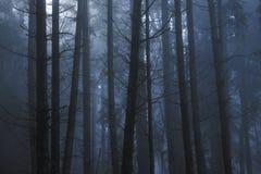 轻穿过树在一有雾的天期间在森林 库存照片