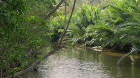 轻轻地吹通过小河和豪华的日本棕榈树树丛的微风 股票视频