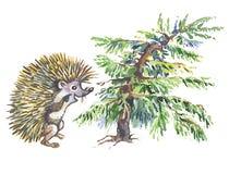 较矮小毛皮猬结构树 免版税库存图片