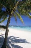 辅助海滩biches棕榈树trou 免版税库存照片
