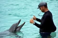 辅导员与海豚互动 库存图片