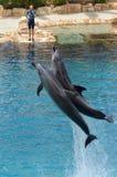 辅导员与海豚互动 免版税库存图片