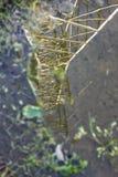 输电线在一条农村路的一个水坑被反射了 免版税库存照片