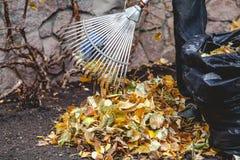 辗压犁耙收集在大堆的下落的叶子 图库摄影