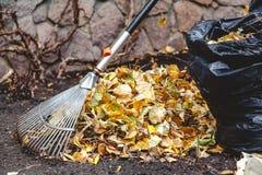 辗压犁耙收集在大堆的下落的叶子 免版税库存图片