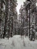 辛华达瀑布树在冬天 图库摄影