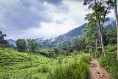 辛哈拉加森林保护区,斯里兰卡 免版税库存图片