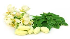 辣木科叶子和花与药片 免版税库存照片