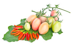 辣椒和蕃茄。 库存照片