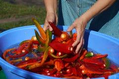 辣椒洗涤物用水 免版税库存图片