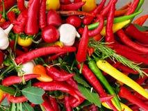 辣椒的果实葱准备销售额 库存照片