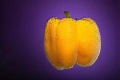 辣椒的果实黄色 库存照片