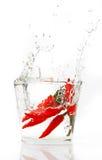 辣椒辣椒红色飞溅的水 免版税库存照片