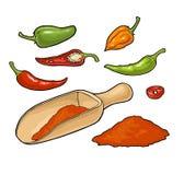辣椒 整个辣椒,一半和切片 传染媒介葡萄酒 皇族释放例证