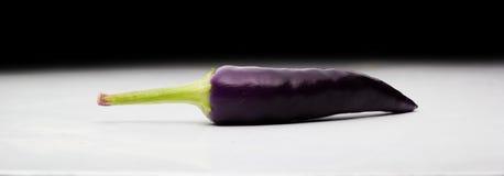 辣椒 他们是当前紫色的,但是甚而将 图库摄影