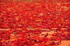 辣辣椒,缅甸地毯  免版税图库摄影