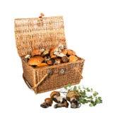 结辨的宝物箱-蘑菇牛肝菌蕈类 隔绝在白色ba 图库摄影