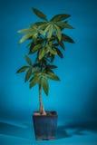 结辨的房子植物 免版税库存图片