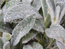 辫子植物 免版税库存图片