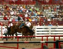 边境日驯养野马的牛仔 免版税库存图片