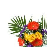 边界五颜六色的雏菊做玫瑰春天 库存照片