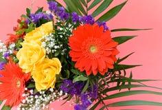 边界五颜六色的雏菊做玫瑰春天 免版税图库摄影