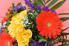 边界五颜六色的雏菊做玫瑰春天 免版税库存图片