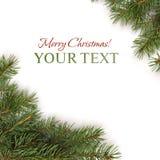 边界分行圣诞树xmas 免版税库存照片