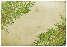 边界圣诞节叶子 免版税图库摄影