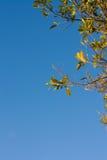 边界常青树 库存图片