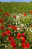 边界开花通配的wheatfield 库存照片