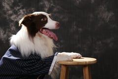 边界接近的大牧羊犬 免版税图库摄影