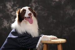 边界接近的大牧羊犬 免版税库存照片