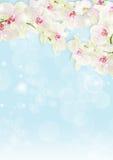 边界新鲜的兰花 免版税图库摄影