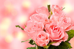 边界桃红色玫瑰 库存图片