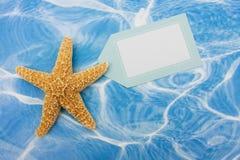 边界海星 免版税库存图片