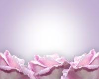 边界淡紫色玫瑰 皇族释放例证