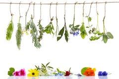边界用各种各样的新鲜的草本和清凉茶在垂悬在上面的白色新鲜的药用植物 准备医药 库存照片