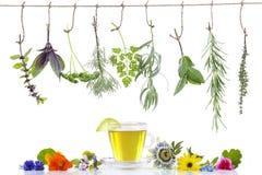 边界用各种各样的新鲜的草本和清凉茶在垂悬在上面的白色新鲜的药用植物 准备医药 免版税图库摄影