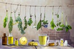 边界用各种各样的新鲜的草本和清凉茶在垂悬在上面的白色新鲜的药用植物 准备医药 免版税库存照片